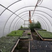 Small Greenhouse and Benches at Stillwater Greenhouse; 50- and 72-tray 1020 flats