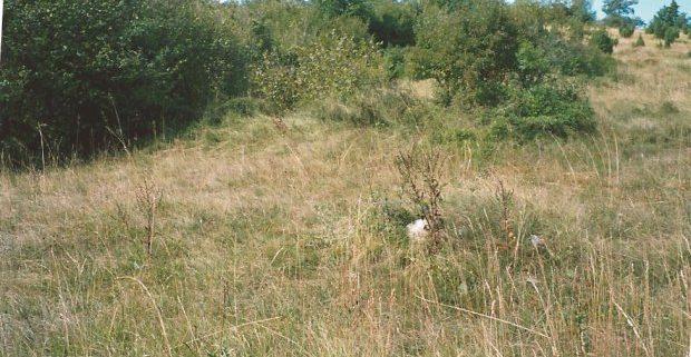 poljoprivredno-zemljiste-pasjak-matulji-3025-m2-slika-54243673