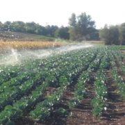 srbac-podsticaji-poljoprivreda
