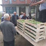 """НОВИ ГРАД, 23. МАЈА /СРНА/ - Кооперантима њемачке фирме """"Карл Кине"""" у општинама Нови Град и Крупа на Уни подијељено је 120.000 садница краставца корнишона, а садња је у завршној фази."""