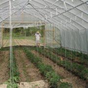 javni-poziv-poljoprivreda-plastenik