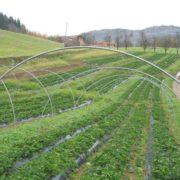 poljoprivreda-celinac