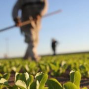 poljoprivreda-sekovici