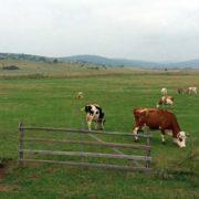 krave-stoka-stocarstvo