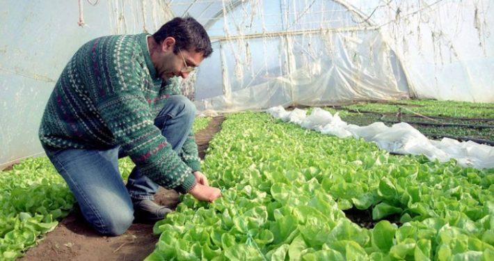 poljoprivreda-plastenik-povrce