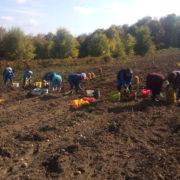 """СРЕБРЕНИЦА, 20. ОКТОБРА /СРНА/ - На плантажи Опште земљорадничке задруге """"Сребреница"""" у Брежанима почело је вађење кромпира."""